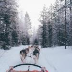 Lapland Holiday with tours
