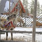 Rovaniemi daily tours