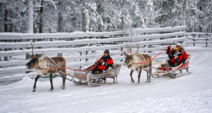 Lapland winter safari